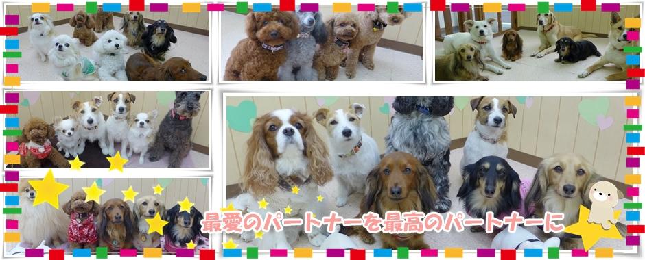 子犬のしつけなら、「犬のようちえん」京阪大和田教室へ。トイレや無駄吠え、社会的マナーを通園して楽しく身につけさせてあげましょう。都島区 旭区 門真市 守口市対応